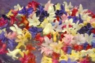 Hyacint flowers potpourri