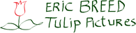 Tulip Pictures - Eric Breed
